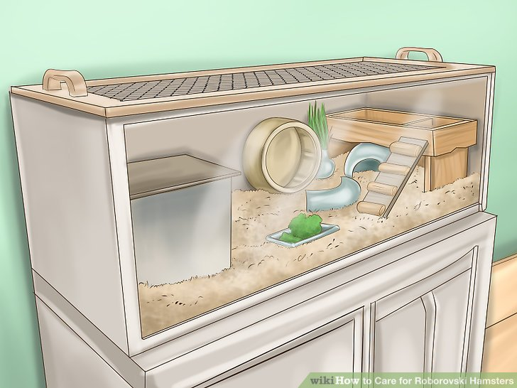 Preparing and Maintaining Your Hamster's Habitat