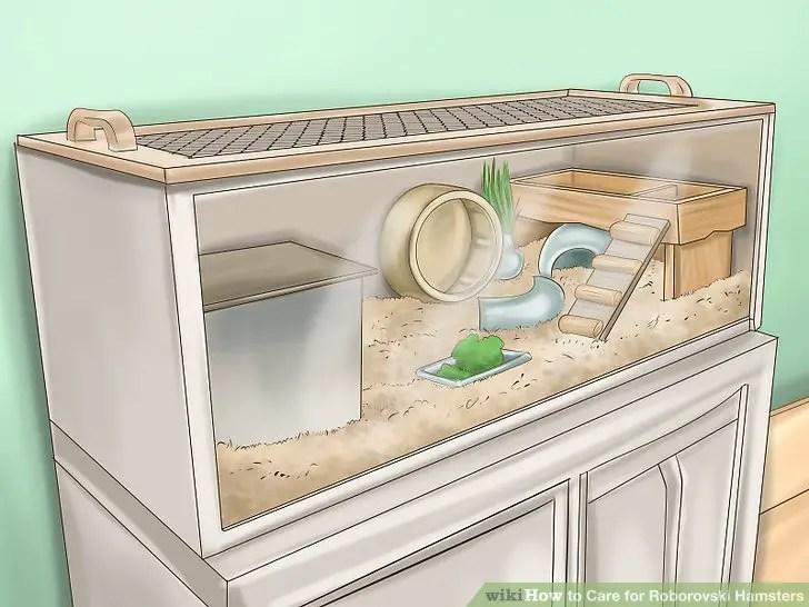 Preparing and Maintaining Your Hamster's Habitat