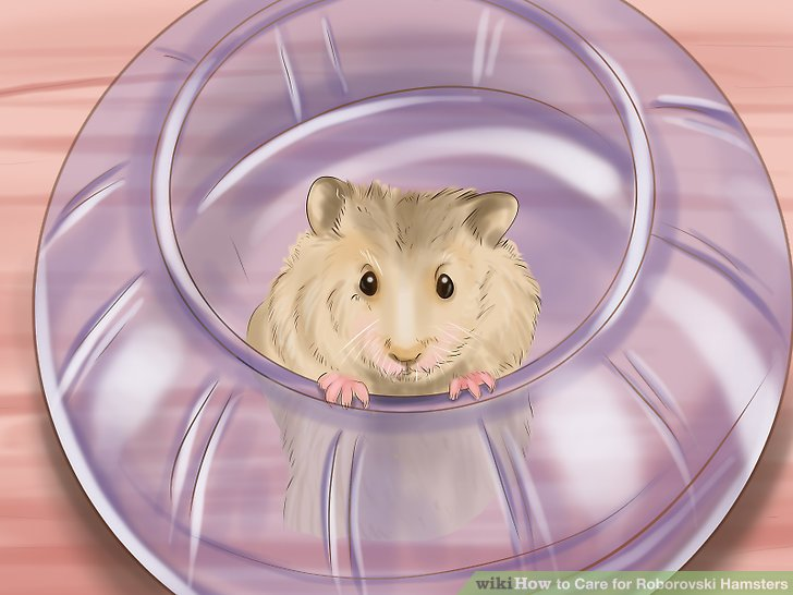 Request to put your hand in the hamster enclosure