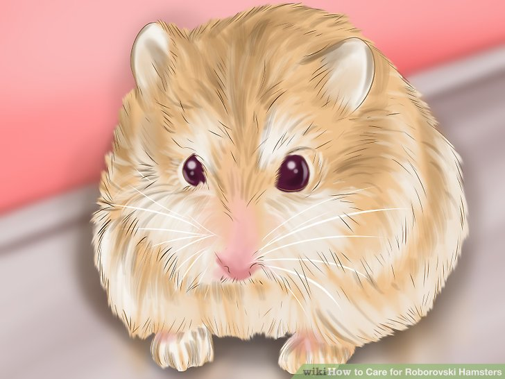 Purchase your hamster