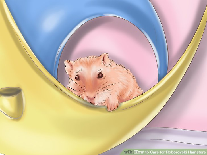 Ensure your hamster is awake before reaching into the habitat.