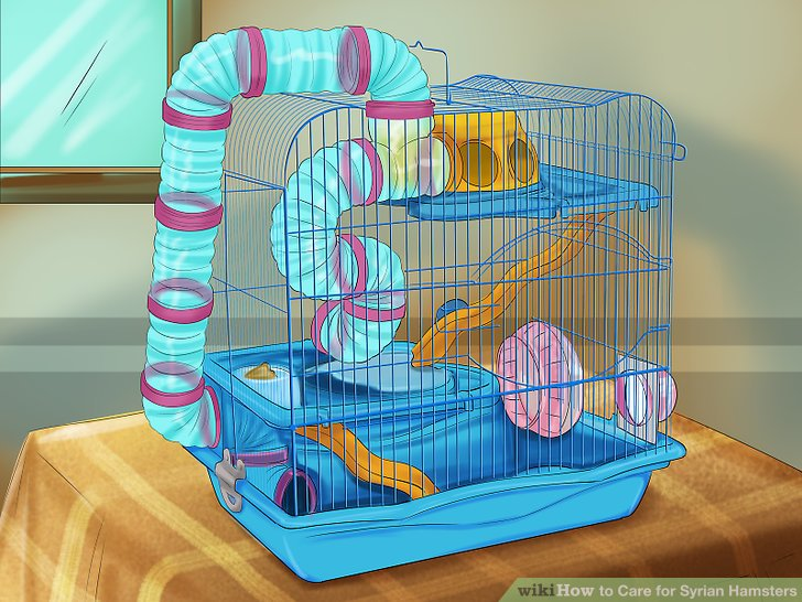 How to Care for Syrian Hamsters? - Hamster Care Sheet
