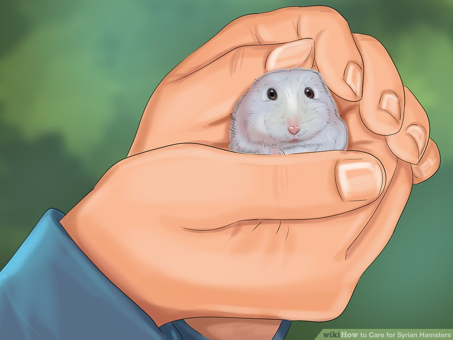 ive your hamster time to get used to you before attempting to pick it up