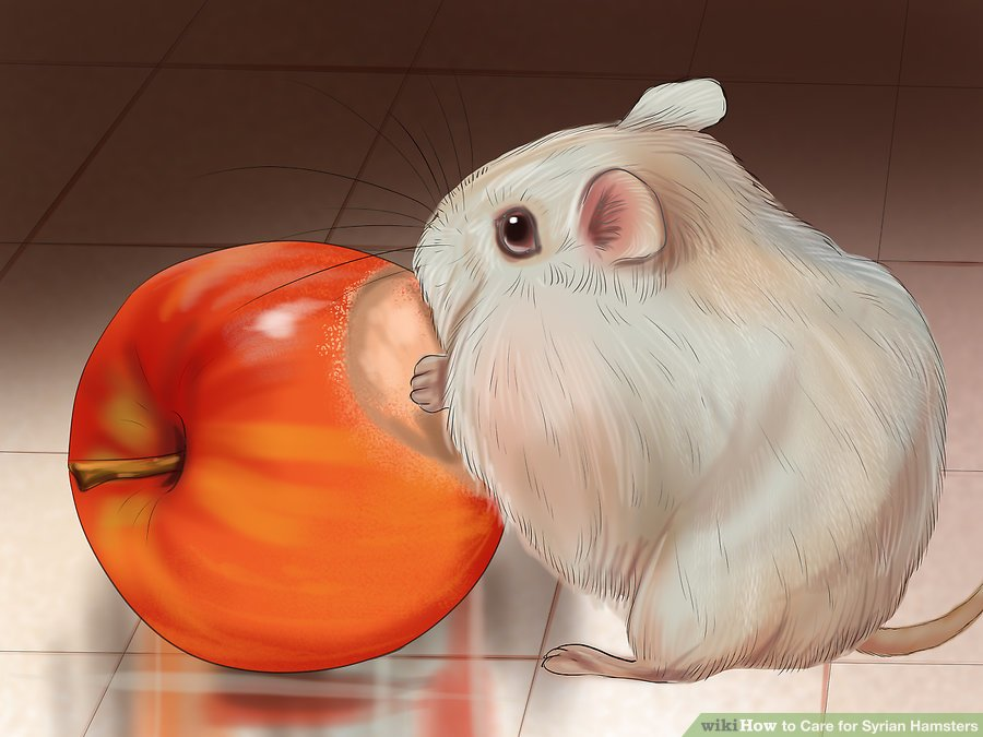 Provide chews to help file down the hamster's teeth