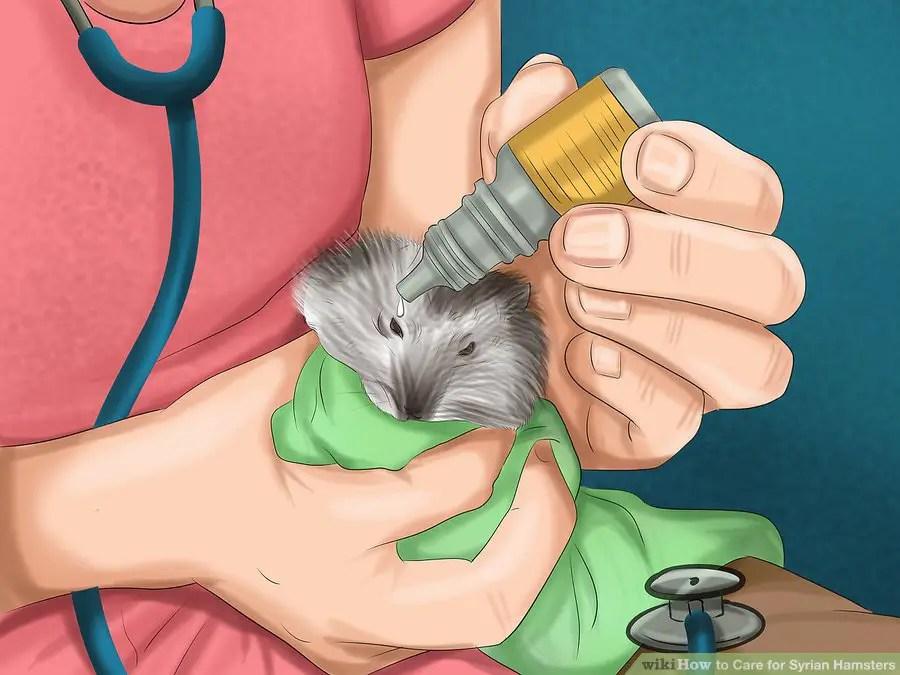 Visit the vet when needed
