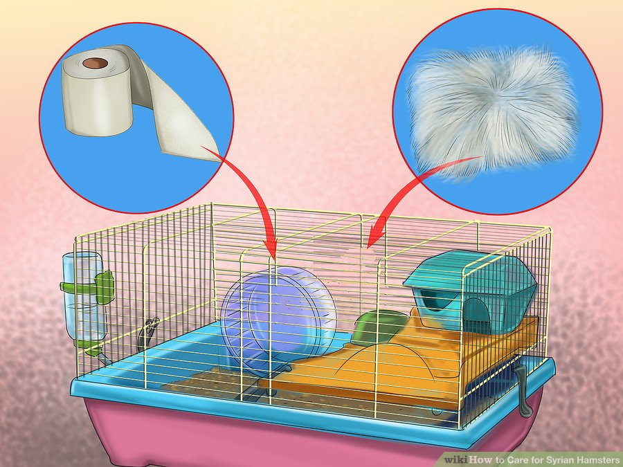 Get bedding for the cage