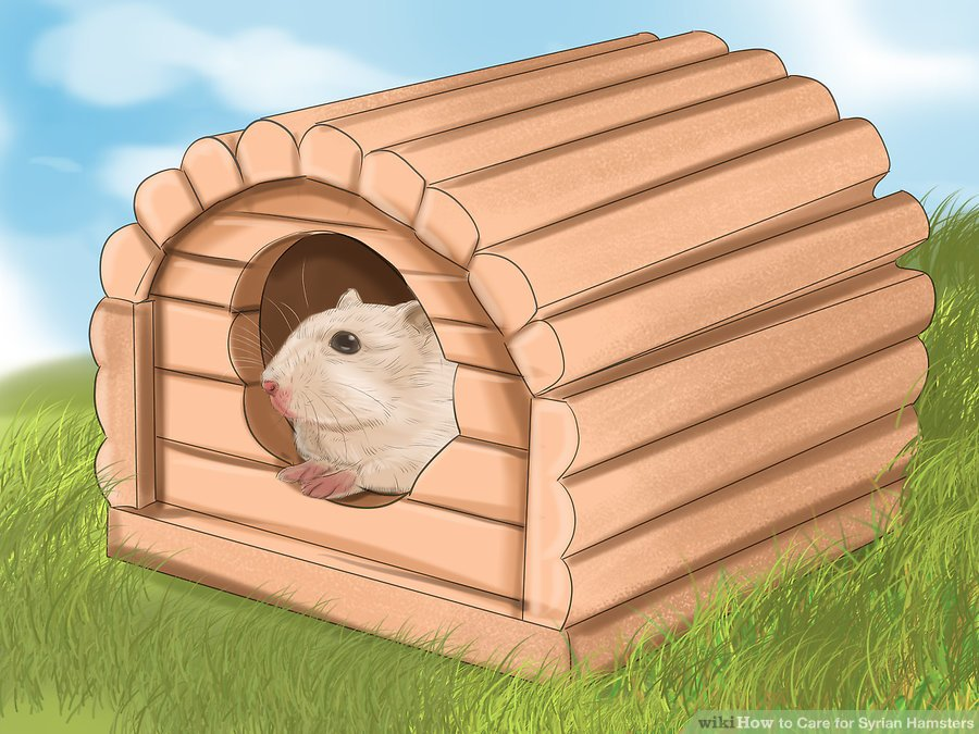 "Buy a ""hamster house"" for your hamster to stuff with nesting material so it feels safe and cozy"