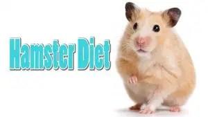 Hamster Diet Chart