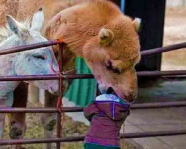 Babies and Animals - Funny Friends. The most comic and pretty video! - babies and animals funny friends the most comic and pretty video