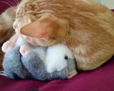 CATS HAVE FUN WITH TALKING HAMSTER! - cats have fun with talking hamster
