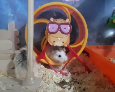 Cute and funny hamsters are doing exercise - cute and funny hamsters are doing