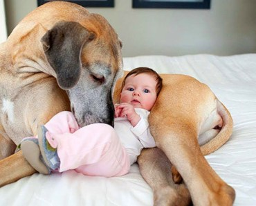 Cute Dogs Babysitting Babies Compilation! - cute dogs babysitting babies compilation