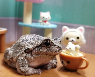 Cute Frogs being Toadily Cute Compilation (Mashup) - cute frogs being toadily cute compilation mashup