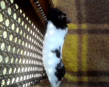 Cute hamster Snow enjoing in the outside (Funny Hamster) - cute hamster snow enjoing in the outside funny hamster