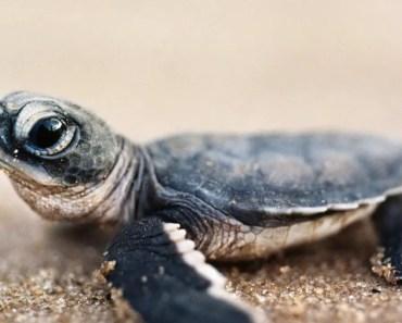 Cutest Baby Turtles! - cutest baby turtles