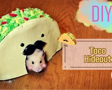 DIY | HAMSTER - Taco House - diy hamster taco house