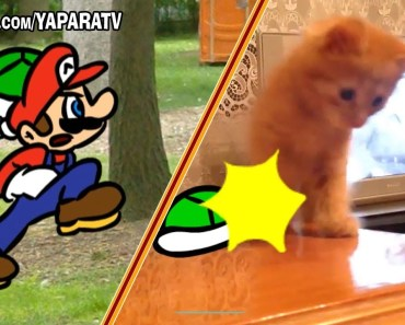 Funny animals - Cats and dogs fail compilation - Super Mario Bros - funny animals cats and dogs fail compilation super mario bros