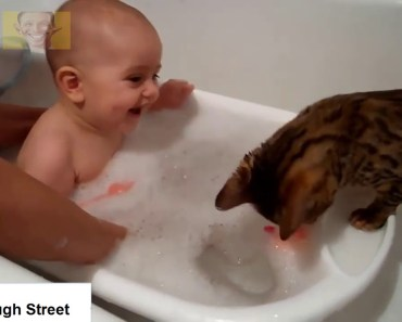 Funny Babies Laughing at Cats Compilation 2018 - Cats Loves Babies Video - funny babies laughing at cats compilation 2018 cats loves babies video