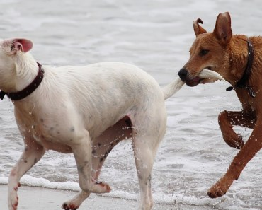 Funny Dogs Playing at the Beach - Ultimate Compilation in Summer 2017 - funny dogs playing at the beach ultimate compilation in summer 2017