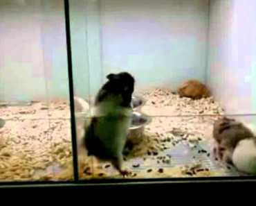 funny hamster and cat - funny hamster and cat