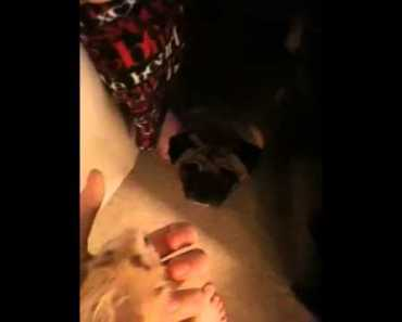 Funny hamster scaring a dog,Lol.(: - funny hamster scaring a doglol