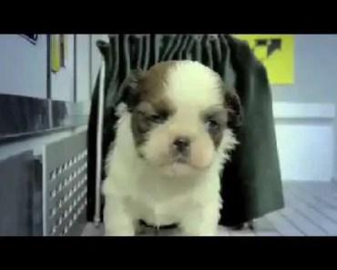 Fuzzy Fuzzy Cute Cute - Parry Gripp - fuzzy fuzzy cute cute parry gripp