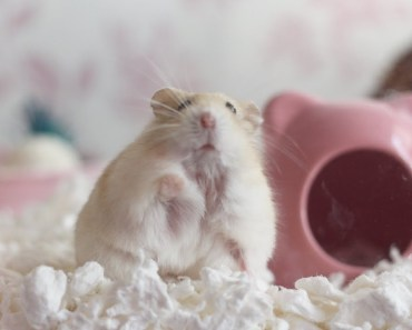 HAMSTER CAGE STICKERS + UPDATES - hamster cage stickers updates