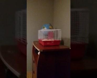 HAMSTER FALLING FUNNY - hamster falling funny