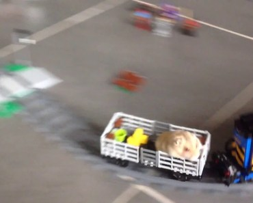 Hamster in lego train - hamster in lego train