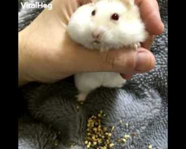 Hamster is soo funny! - hamster is soo funny