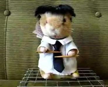 happy birthday hamster - happy birthday hamster