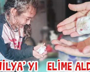 Mira Vanilya 'yı eline aldı | Hamster Videoları | UmiKids - mira vanilya yi eline aldi hamster videolari umikids