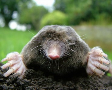 Mole Top funny - Funny animal Memes Pictures Compilation 2018 - mole top funny funny animal memes pictures compilation 2018
