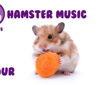 Music for Hamsters. Relax Your Pet Hamster with Calming Tunes from Pet Tunes. - music for hamsters relax your pet hamster with calming tunes from pet tunes