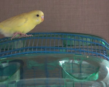 my parakeet makes friend with hamster - my parakeet makes friend with hamster