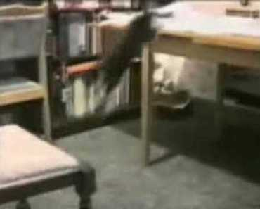 Probably the Funniest Cat Video You'll Ever See - probably the funniest cat video youll ever see