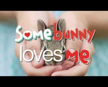 Somebunny Loves Me - A book about pets from Parry Gripp! - somebunny loves me a book about pets from parry gripp