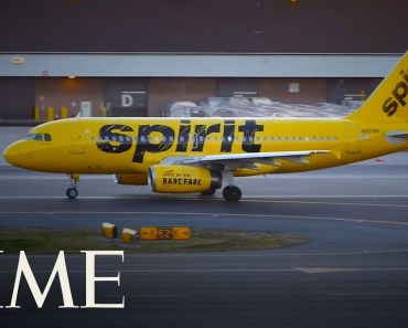Spirit Airlines Slams Student Who Was Forced To Flush Emotional Support Hamster Down Toilet | TIME - spirit airlines slams student who was forced to flush emotional support hamster down toilet time