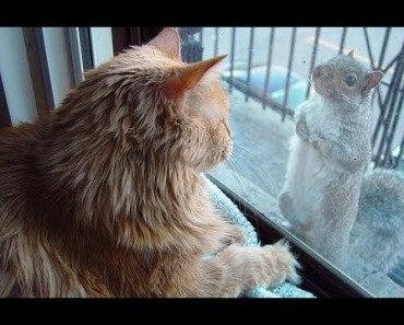 Squirrels Annoying Cats - Funny Animal Videos Compilation 2018 [CUTE] - squirrels annoying cats funny animal videos compilation 2018 cute