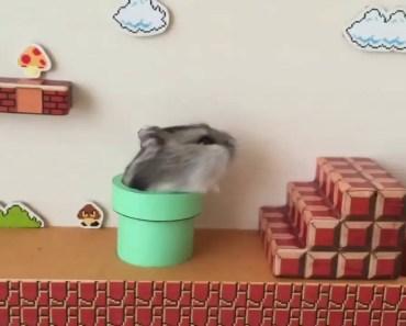Ultra Cute! Super Mario Hamster - ultra cute super mario hamster