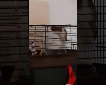 Un hamster pas comme les autres - un hamster pas comme les autres