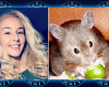 Woman claims Spirit Airlines told her to flush Hamster - woman claims spirit airlines told her to flush hamster