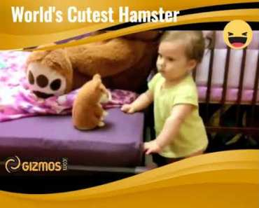 World's Cutest Hamster - worlds cutest hamster