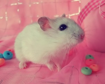 15 Crazy Hamster Facts - 15 crazy hamster facts