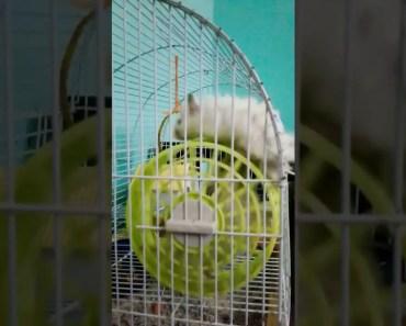 Funny hamster - 1522523150 funny hamster