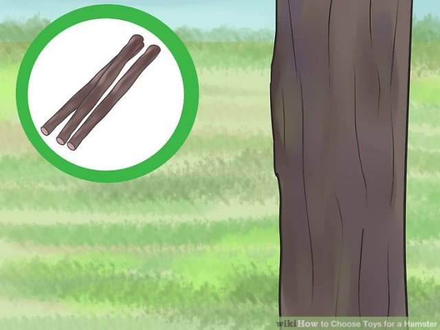 Give your hamster dried, untreated fruit-tree branches