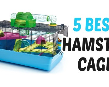 Best Hamster Cage 2018 - Hamster Cage Review - best hamster cage 2018 hamster cage review