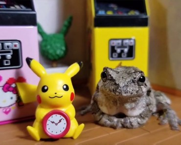 Cutest Frogs Ever!!! [ Frog Mashup] - cutest frogs ever frog mashup