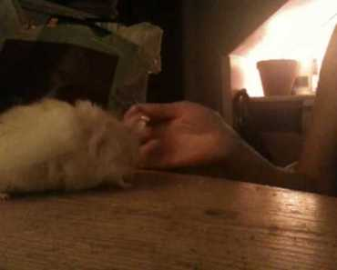 Farting Hamster? - farting hamster