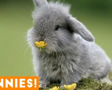 Funniest Rabbit Videos Weekly Compilation 2018 | Funny Pet Videos - funniest rabbit videos weekly compilation 2018 funny pet videos